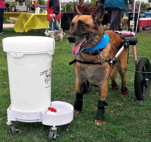 Dog Water Dispenser Large