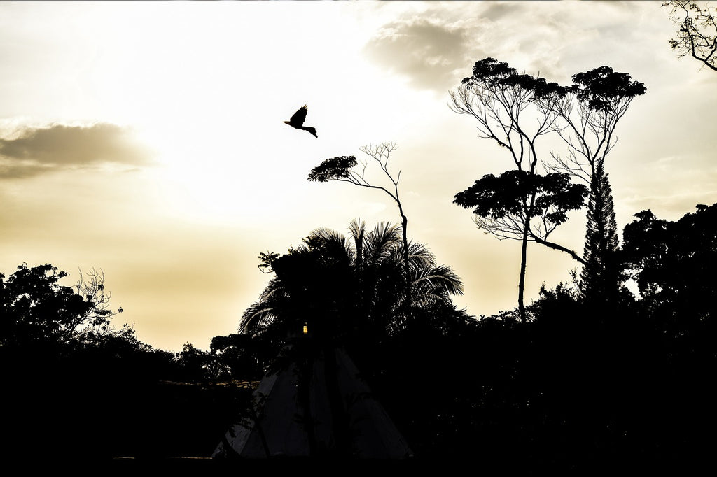 Silhouette of the forest with a bird flying in the sky