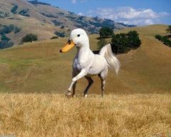 White horse with a duck head