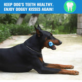Bowlox Dog Toothbrush Chew Toy Bowlox Dog Toothbrush Chew Toy