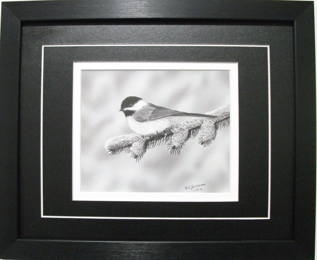 Chickadee by Glen Scrimshaw