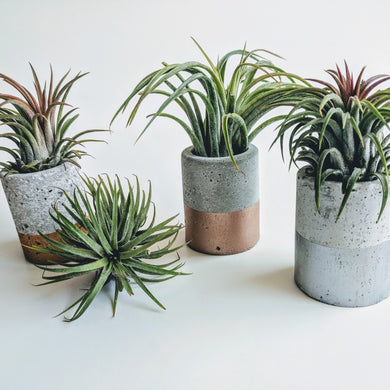Metallic Mini Concrete Planter