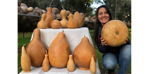 Extra Large Clean Gourds + 4 FREE People Gourds + 6 FREE Small Gourds