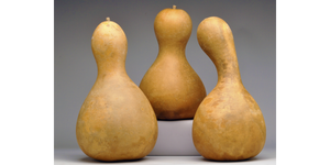 Pre-Boxed CLEAN Bottle Gourds