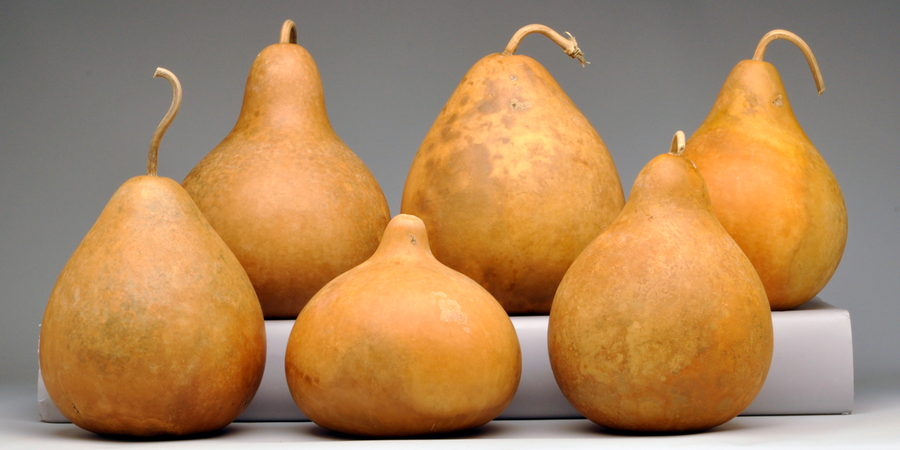 Pre-Boxed CLEAN Round Body Gourds