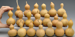Pre-Boxed CLEAN Jewelry Gourds in Bottle Shape