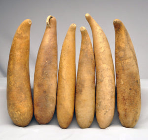 Pre-Boxed CLEAN Large People Gourds