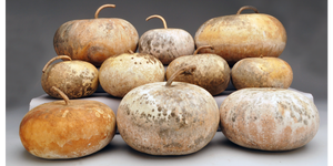 'Distressed Finish' Gourds