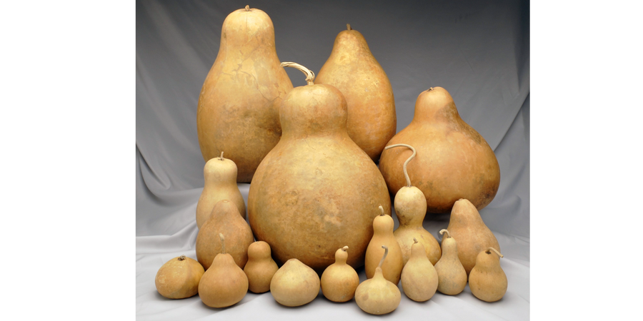 4 Giant Clean Gourds + 4 FREE Small Gourds+10 FREE Mini Gourds