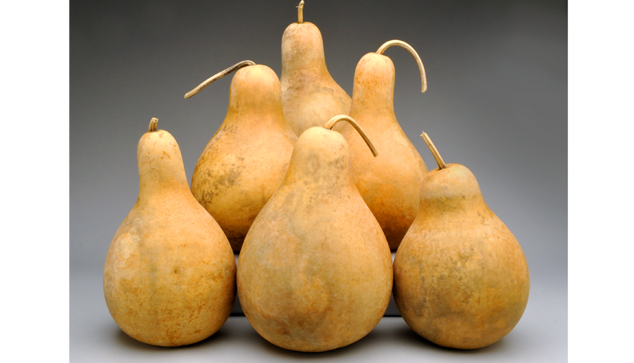 Bargain Quality Pre-Boxed CLEAN Gourds