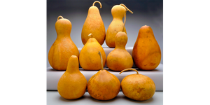 Gourds for Kids