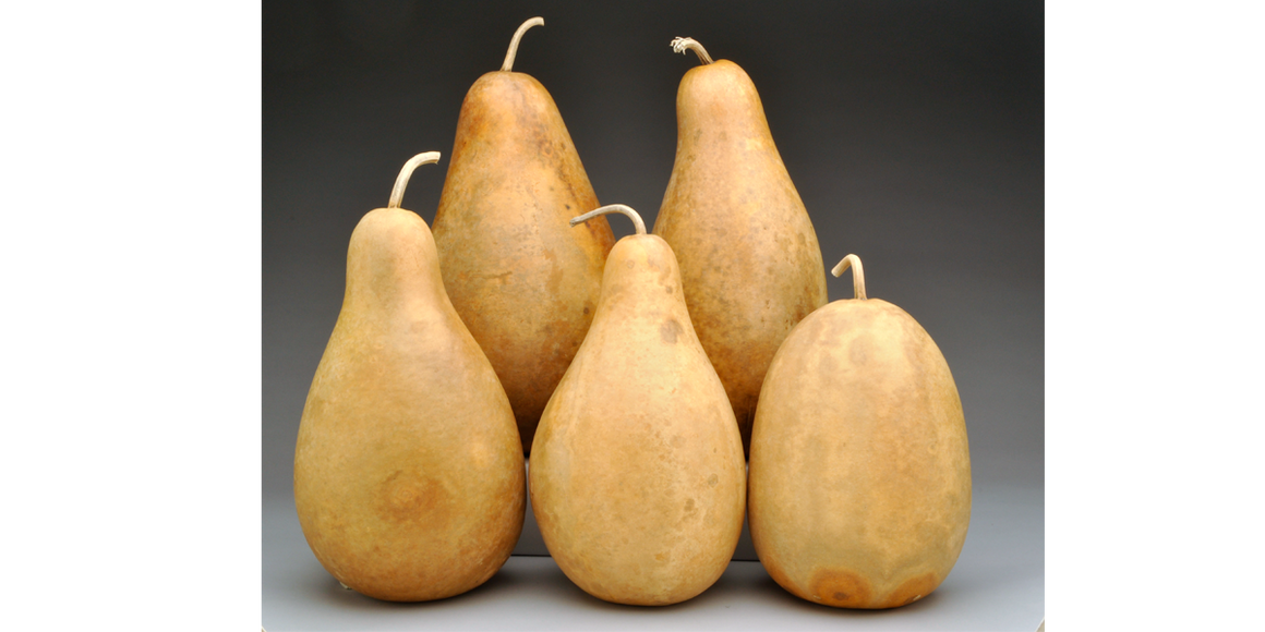 Pre-Boxed CLEAN Tall Body Gourds