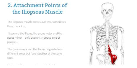 where does the iliopsoas muscle attach