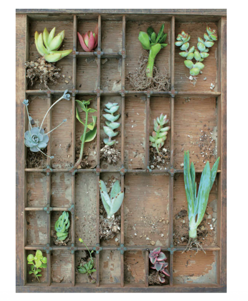 Container Succulents Book