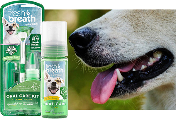 The Importance Of Good Oral Care For Your Pet