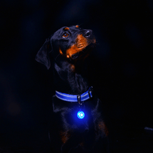 Rogz Safety Light For Dog Collar