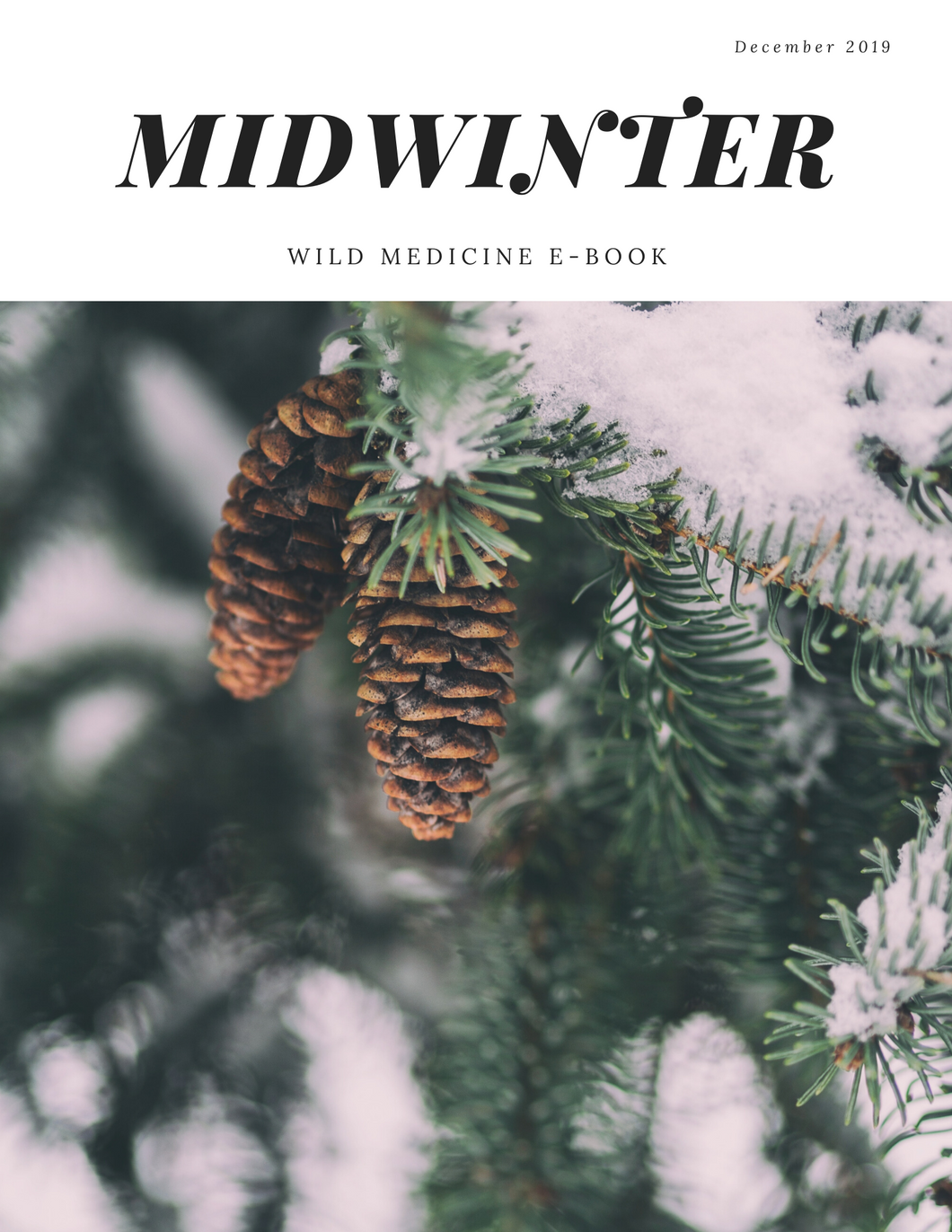 Midwinter Wild Medicine E-Book {Full Version}
