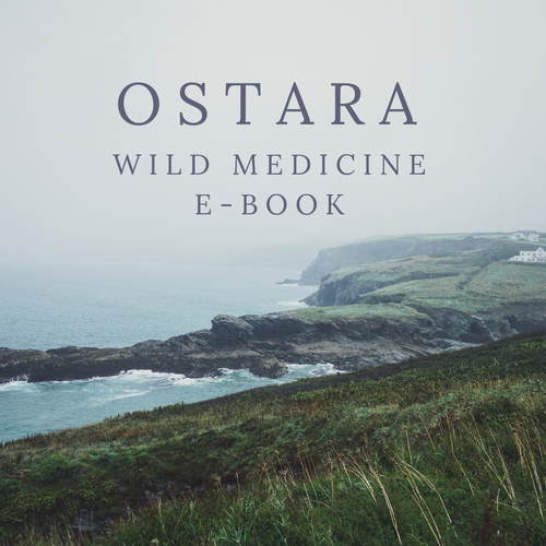 Ostara Wild Medicine E-Book (Full Version)
