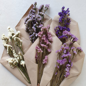 Dried Everlasting Flowers - Common Room PH