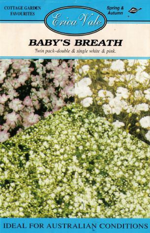 Baby's Breath - end of line - limited stock