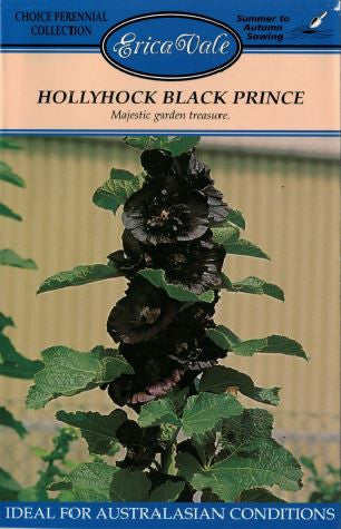 Hollyhock Black Prince