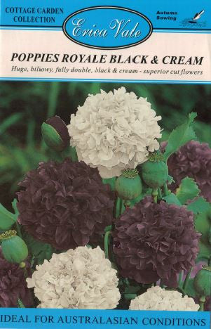 Poppies Royale Black and Cream