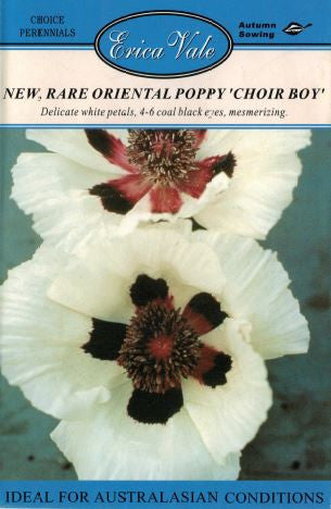 Rare Oriental Poppy 'Choir Boy'