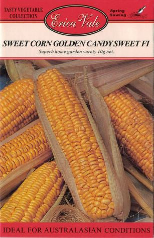 Sweet Corn Golden Candy Sweet F1 (Not for sale WA)