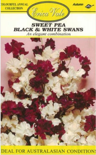Sweet Pea Black and White Swans