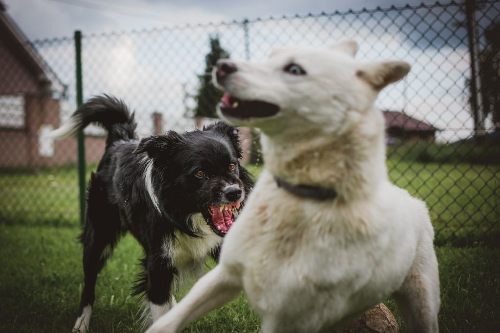 What You Need To Know About Dog Aggression