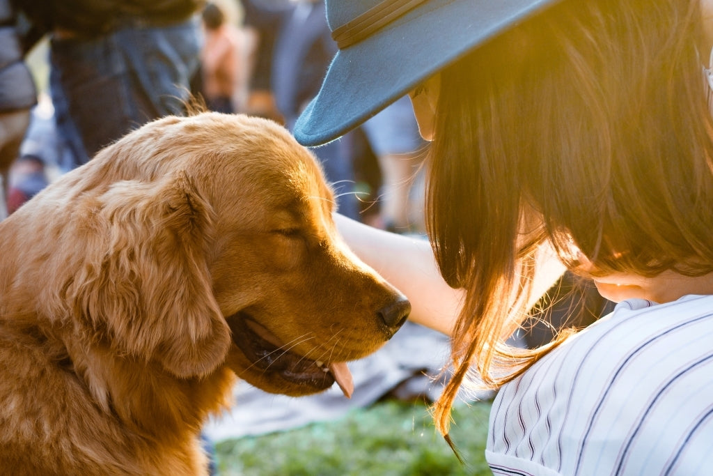 Top 3 Tips For Building Trust With Your Dog