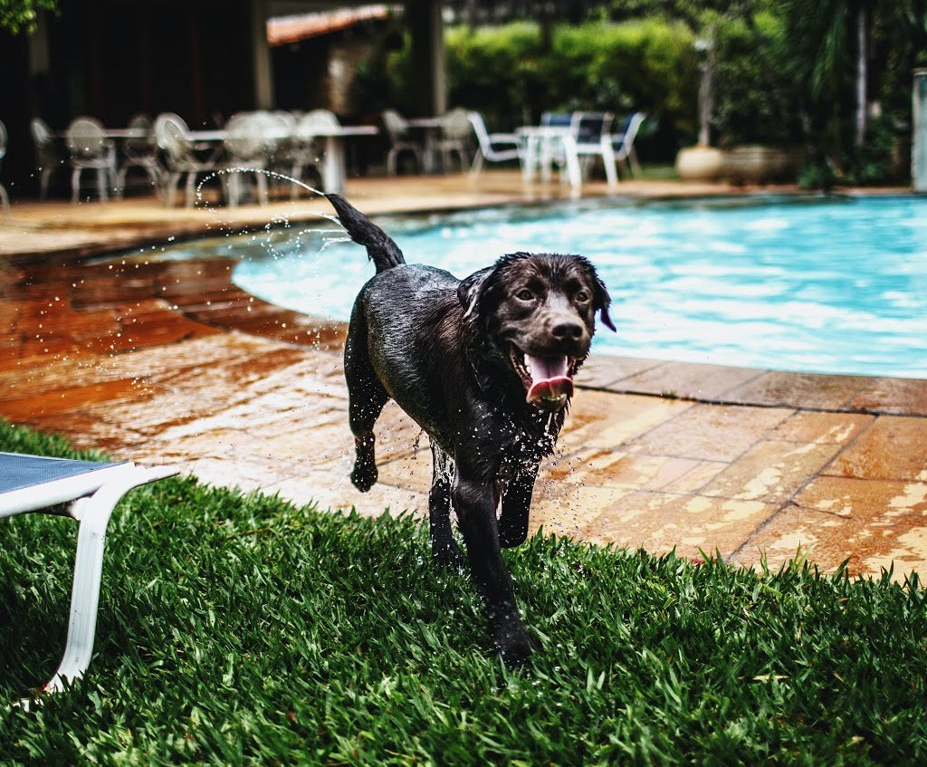 Top 5 Dog Friendly Hotels in Singapore