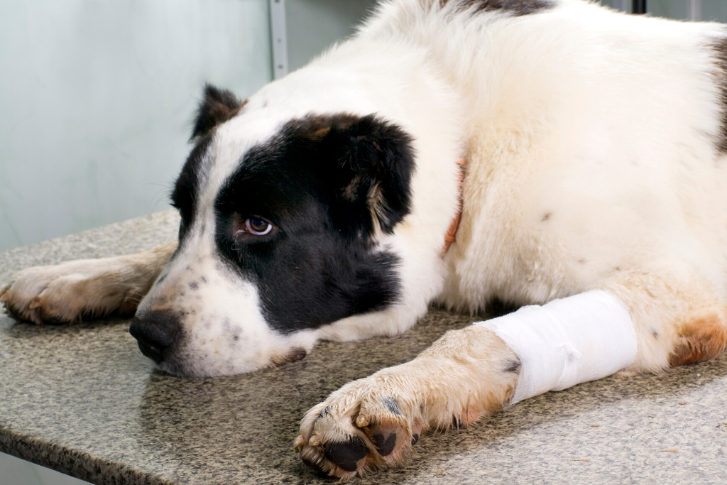 Liver Disease in Dogs: Is it Curable?
