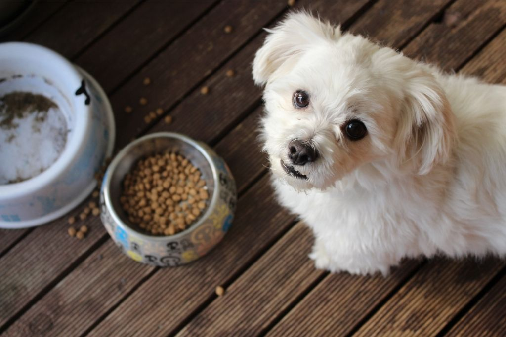 How To Switch Your Dog To New Dog Food