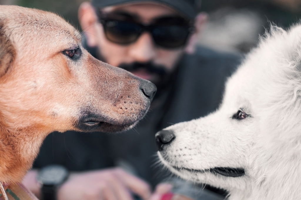 5 Tips for Introducing A New Dog To Your Current Dogs