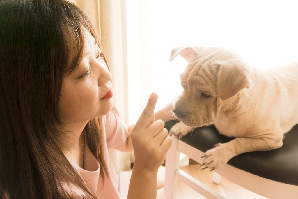Dog Training Tools That Are Actually Harmful