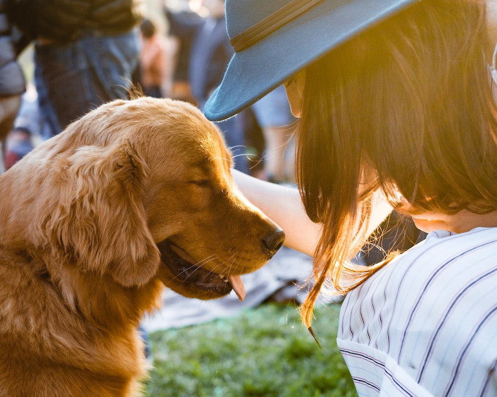 How To Greet A Dog: 5 Dos and Don'ts
