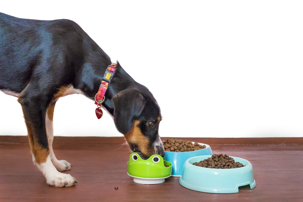 6 Best Dog Food For Your Dog