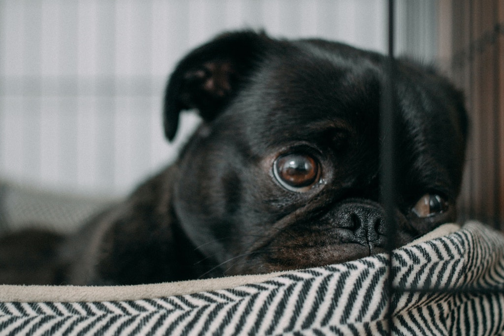How Can I Tell If My Dog Has Depression?