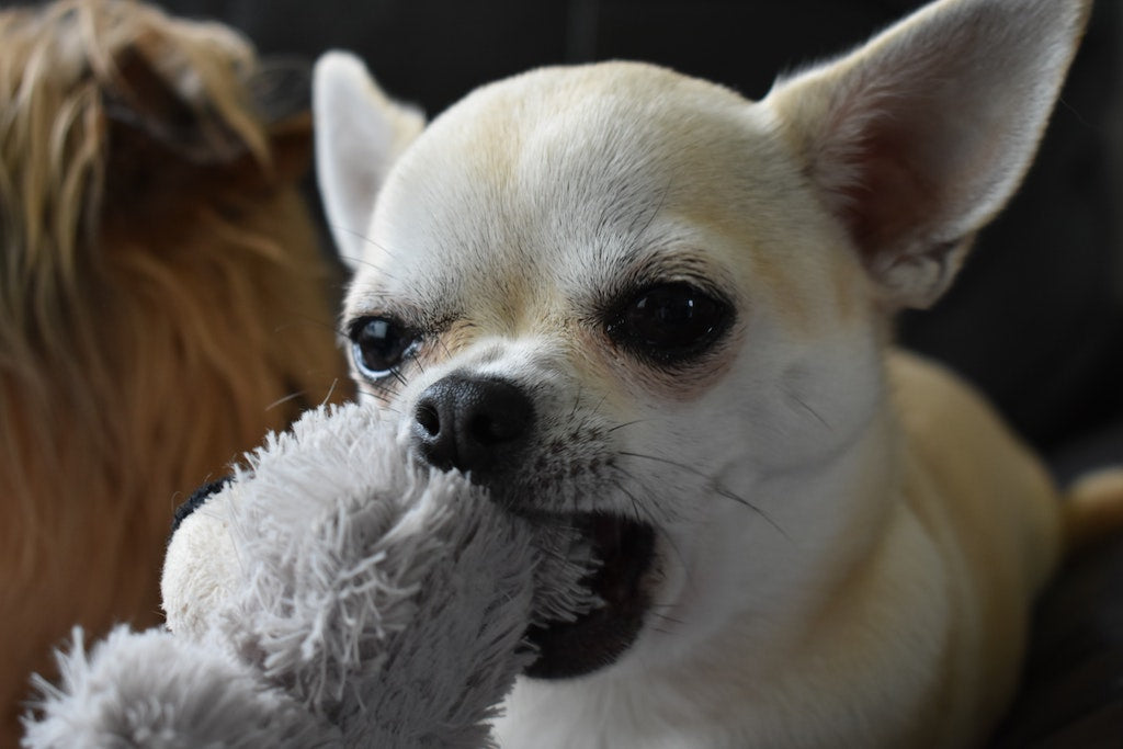 4 Ways To Correct Your Dog's Chewing Behaviour