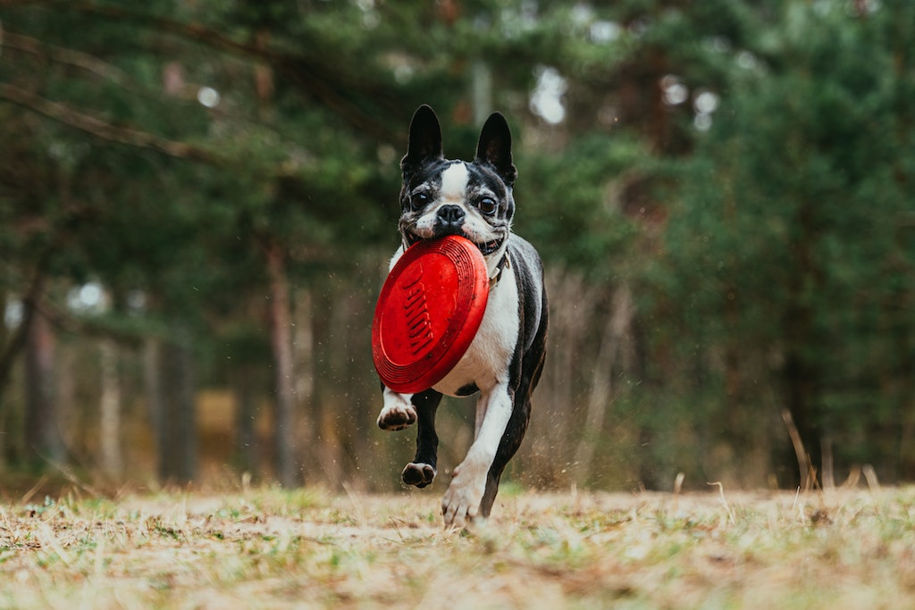 5 (Fun) Ways to Add Supplements to your Pup's Meal