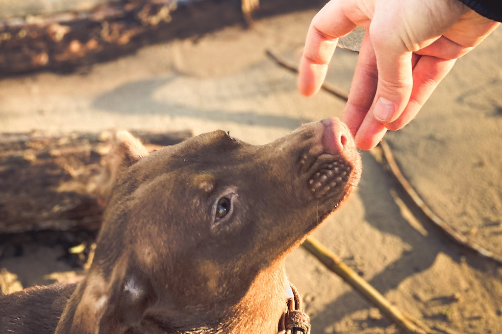 5 Foods You Can Enjoy With Your Dog