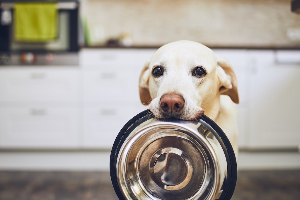 Dog Food Toppers: What Are They and Do You Need Them?