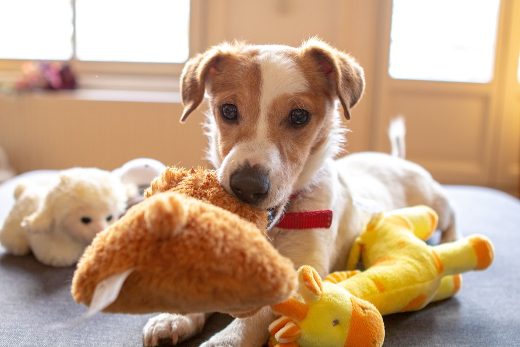 Caring for Dogs With Cancer