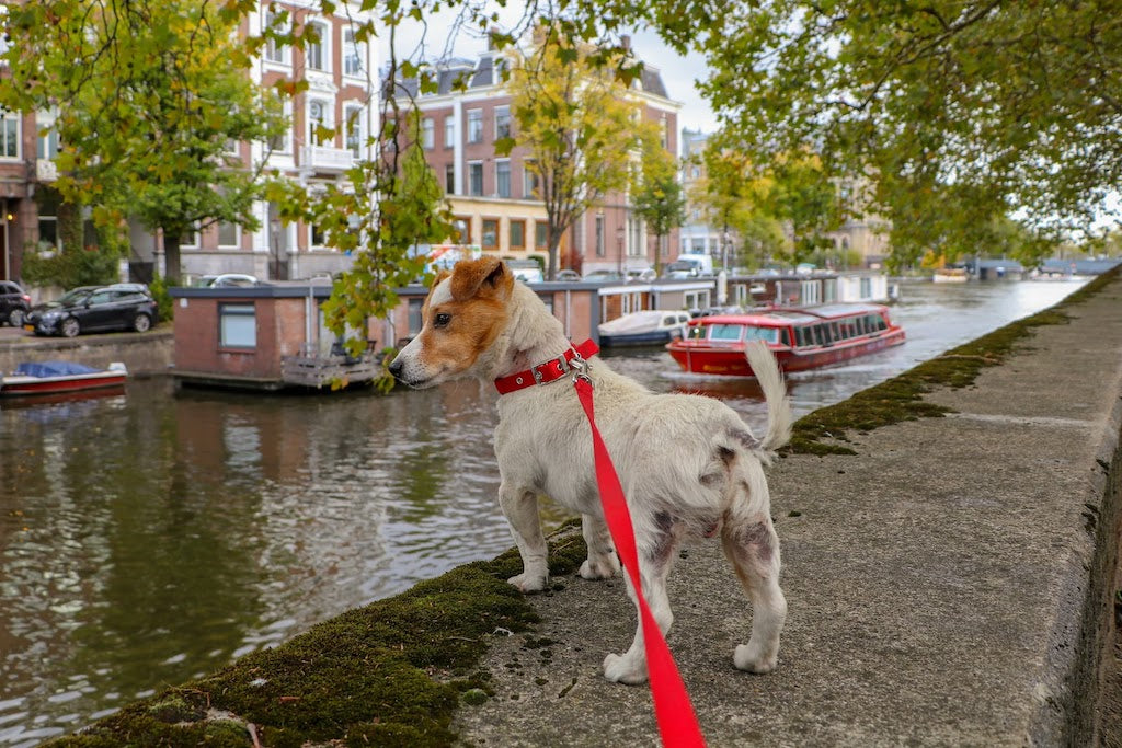 3 Easy Tips For Picking The Best Leash For Your Pup