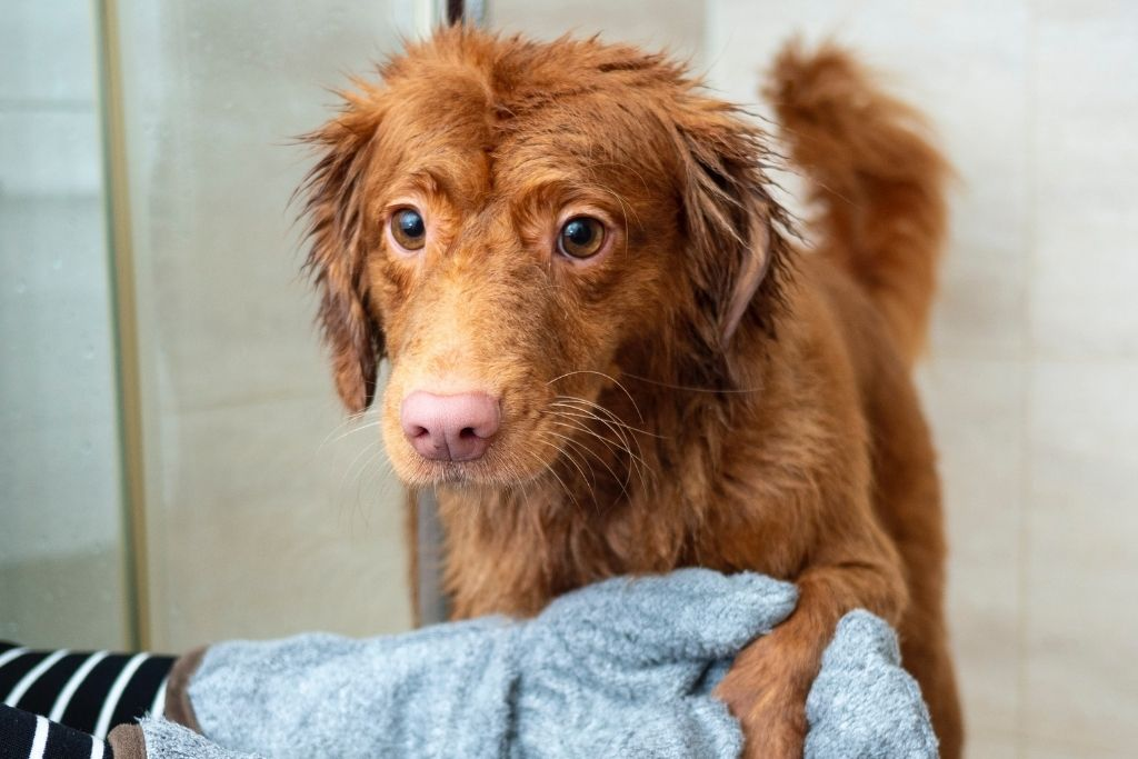 What You Need To Know About Bathing Your Dog