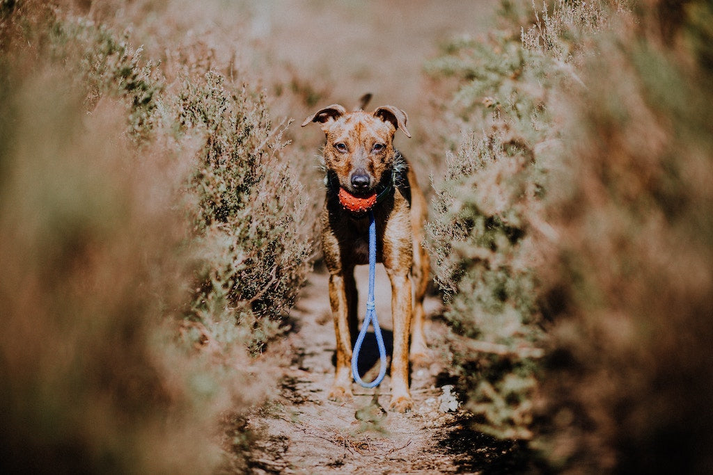 4 Tips For Taking Care of Visually Impaired Dogs