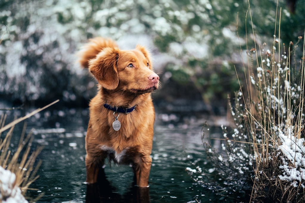 5 Things You Need To Know About Fleas On Dogs
