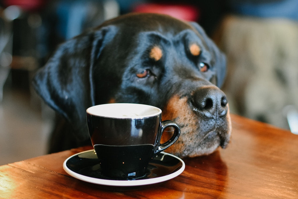 Canine Bloat: A Major Problem All Pet Parents Need to Take Note Of
