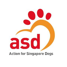 8 Places to Adopt Dogs in Singapore